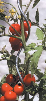 Round Tomato Cage Plant Support